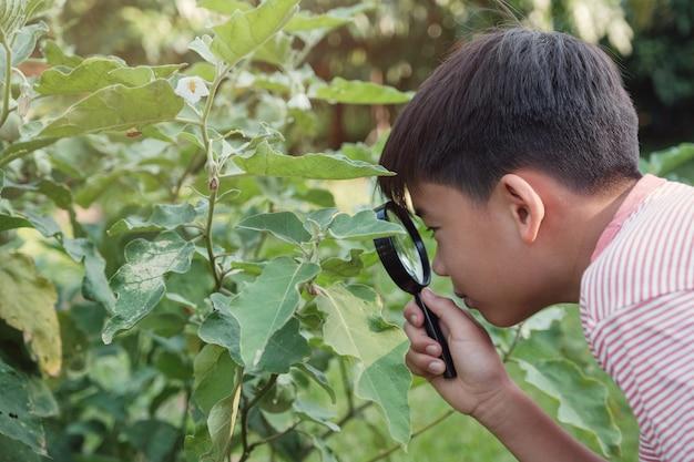 植物の病理