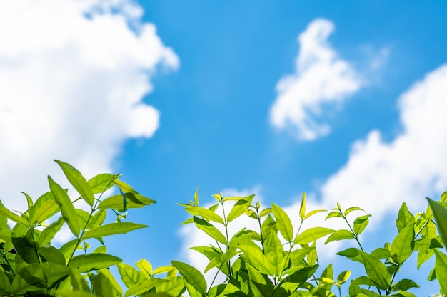 ブルースカイと雲と自然のまま
