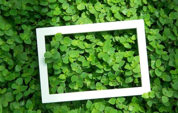 花と白いフレームと葉で作られた創造的なレイアウト。上面図。自然のコンセプト