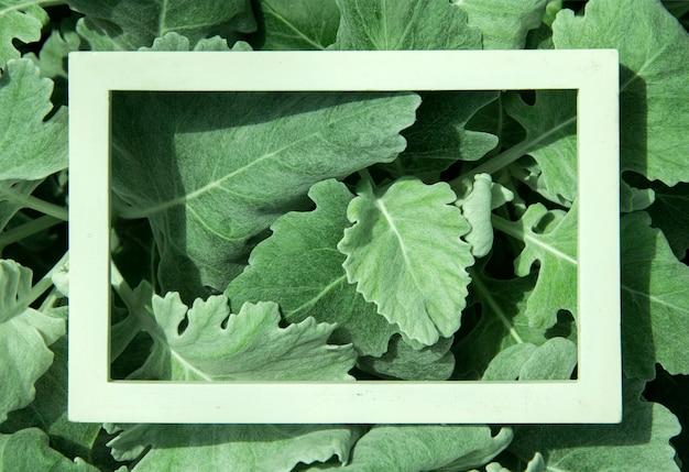 ホワイトフレームの葉で作られたクリエイティブなレイアウト。上面図。自然のコンセプト