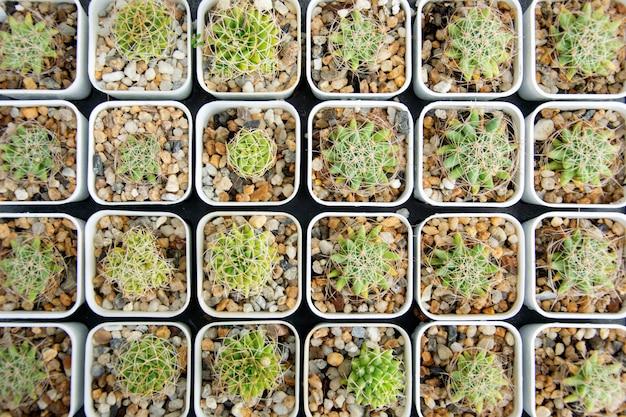 混合多肉植物またはサボテンの背景
