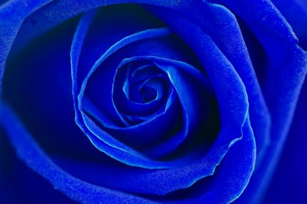青いバラの花の背景