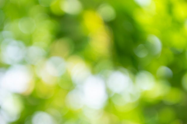 Размытый фон из зеленых листьев