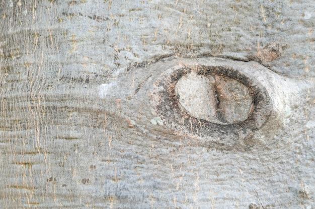バオバブの木のテクスチャの背景