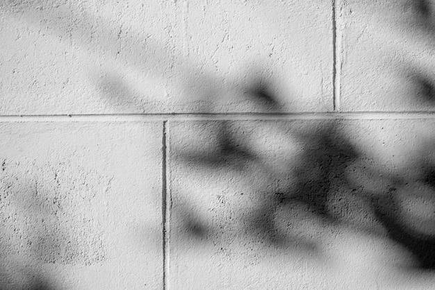 Черно-белая абстрактная текстура предпосылки листа тени на бетонной стене