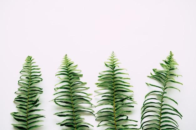 白い背景の上の熱帯植物
