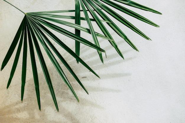 Абстрактная текстура предпосылки листьев ладони теней на бетонной стене