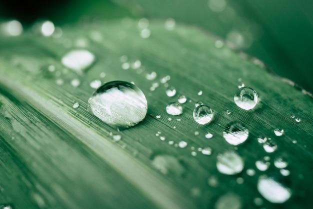 葉の上に水滴。緑の自然の背景