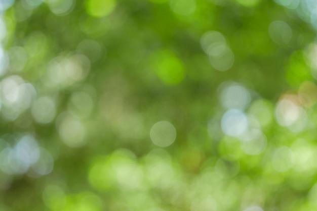 日当たりの良い抽象的な緑の自然