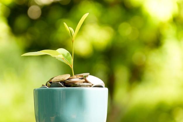 Сэкономьте деньги для инвестиционной концепции. растение растет из монет