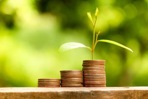 投資コンセプトのためにお金を節約します。コインから育つ植物