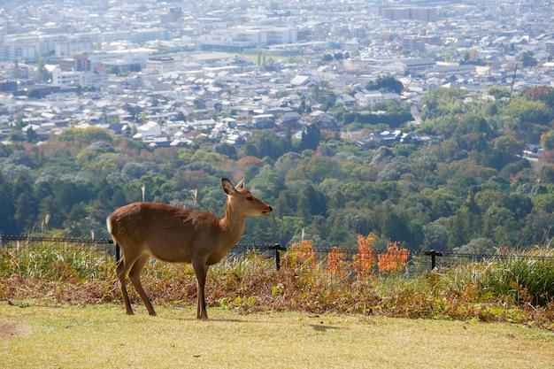 奈良公園の美しい自然の鹿。日本旅行の概念
