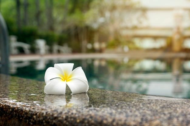 リラックスした日にプールの端にプルメリアの花