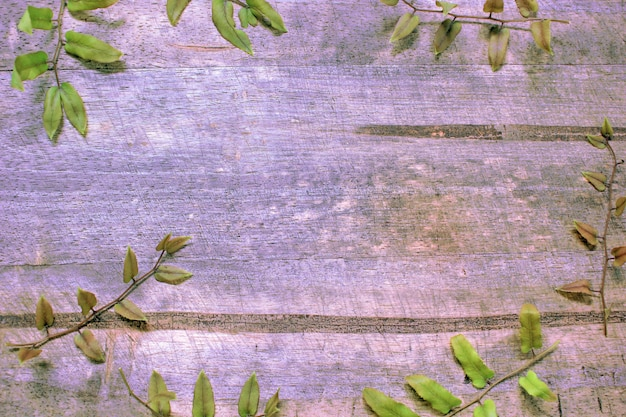 シダの葉で木の床の後ろ。