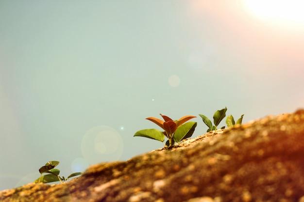 小さな木は岩の上に繁栄します