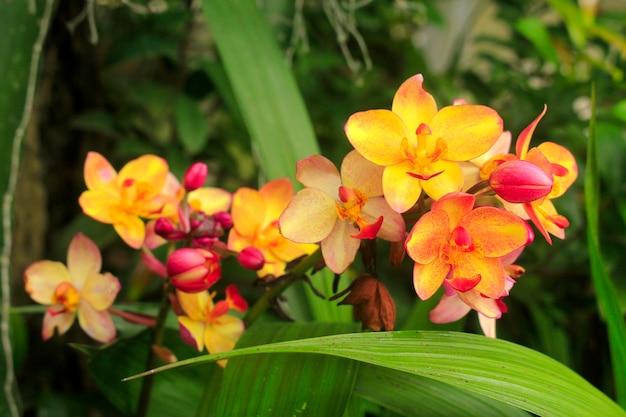 地上の蘭、夏の庭の明るい色。