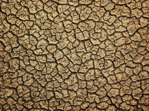 乾燥したひびの入った床