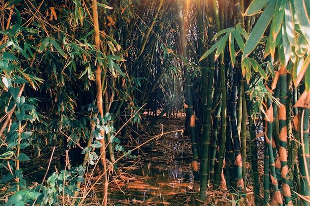 Бамбуковый лес затоплен в сезон дождей.