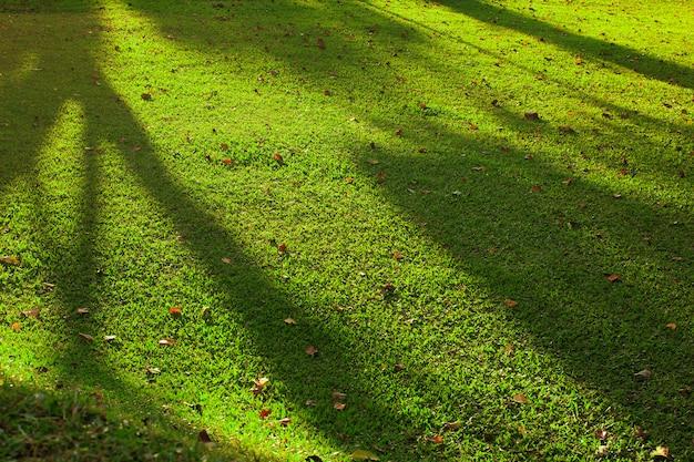Тени и свет на зеленой траве.