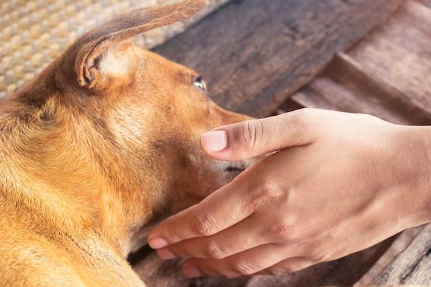 所有者は愛と優しさに横たわっている犬と一緒に遊ぶ。