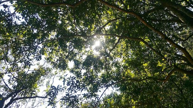 木の低い角度のショット