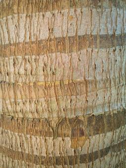 ココナッツ木の幹の皮、背景の木の質感
