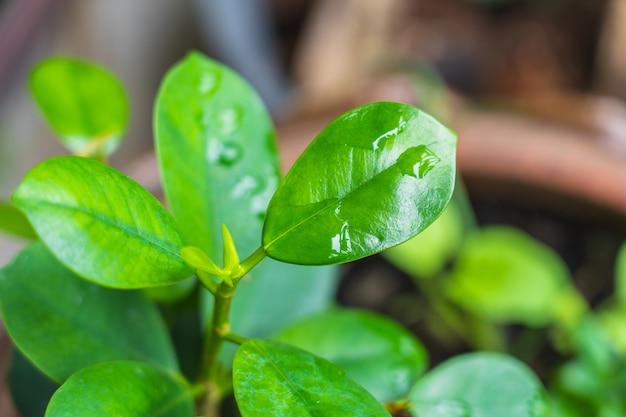 明るい緑の植物の葉からぼやけて抽象的なスタイル