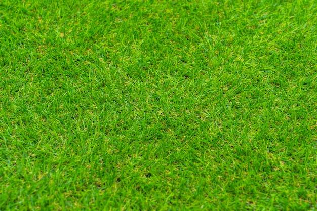 新鮮な緑の手入れの行き届いた芝生をクローズアップ。