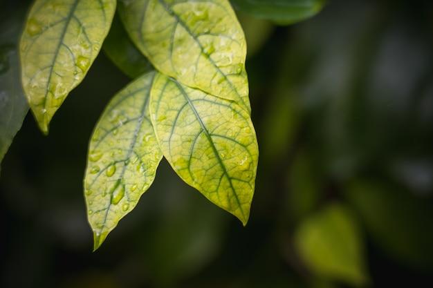 明るい緑の自然な背景植物の葉からぼやけて抽象的なスタイル