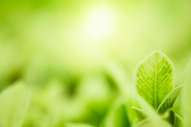 日光とぼやけた緑の木の背景に自然の緑の葉