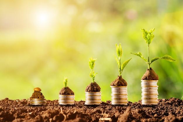 緑と日光でスタッキングするコインに輝く植物。金融と投資の概念。