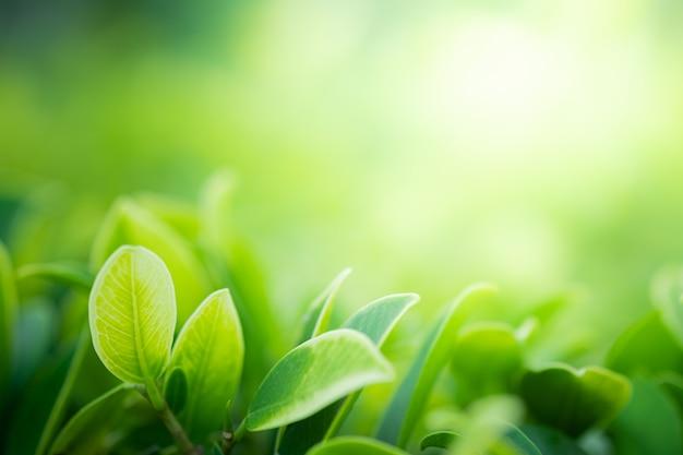 Красивый вид крупного плана зеленого цвета природы выходит на запачканную предпосылку дерева растительности с парком сада солнечного света публично. это ландшафтная экология и пространство для обоев и фона.