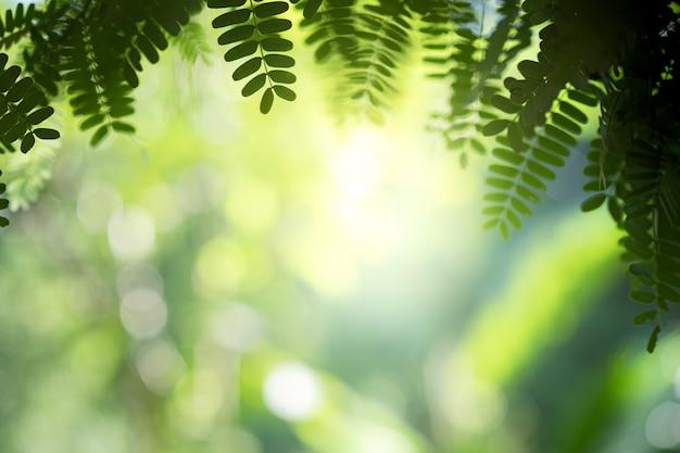 緑の自然緑の葉の美しい景色をクローズアップは、日光とコピースペースで背景をぼかし。