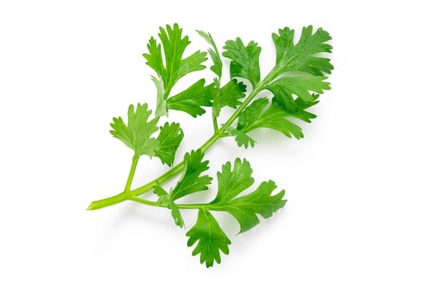 Взгляд сверху (плоское положение) изолированное свежих листьев кориандра на белой предпосылке. обтравочный контур фото.