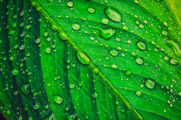 雨の後に発生する緑の葉に雨の水滴。