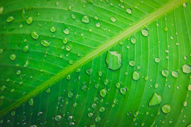 雨の後に発生する緑の葉のマクロに雨の水滴。