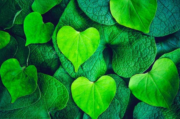 朝の栄光と背景と壁紙のコンセプトのための創造的な心の形の緑の葉。
