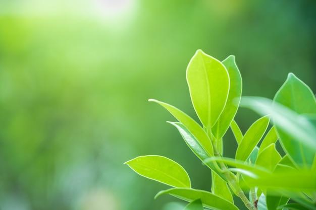 ぼやけた緑の木の背景に自然の緑の葉の美しい景色を閉じる