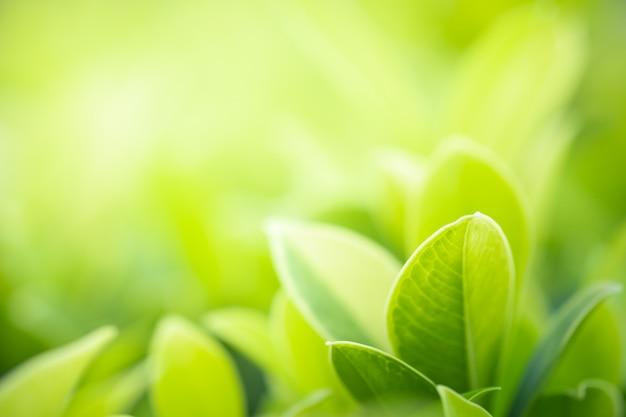 ぼやけている緑の木の背景に自然の緑の葉の美しい景色を閉じる