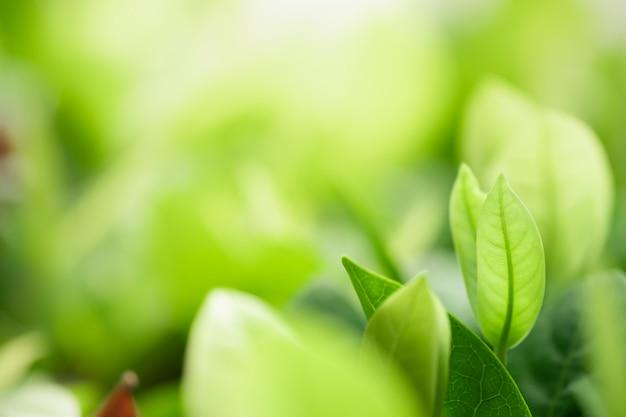 日光とぼやけている緑の木の背景に自然の緑の美しい景色を葉します。