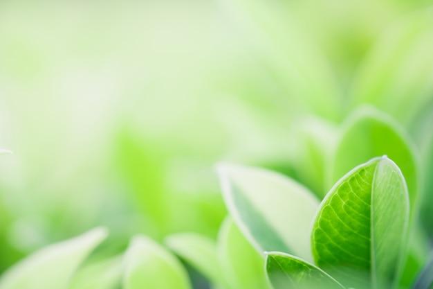 自然の緑の葉の美しい景色を閉じる