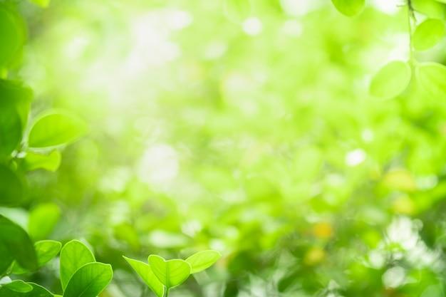 自然の緑の葉のクローズアップの美しい景色