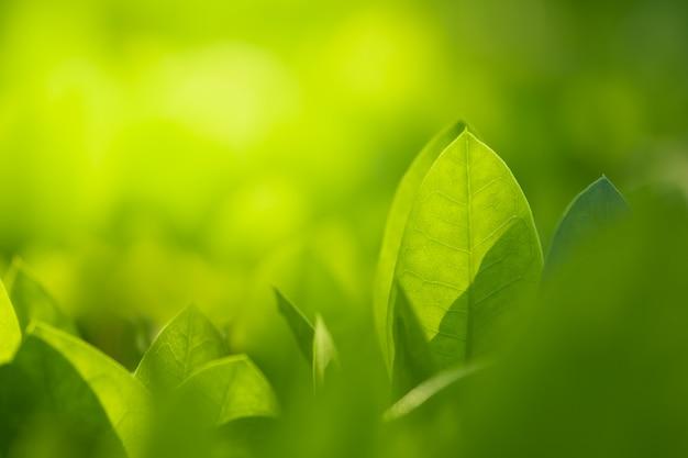 Крупным планом красивый вид природы зеленых листьев на фоне затуманенное зелени деревьев