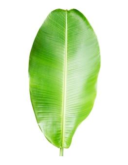 白コレクションバナナの葉の分離