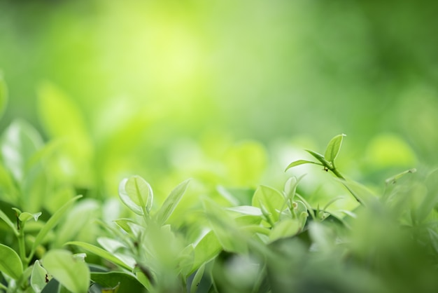 日光と緑のぼやけた背景に自然の緑の葉の美しいビューをクローズアップ