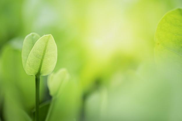 Зеленые листья на фоне размытой зелени деревьев