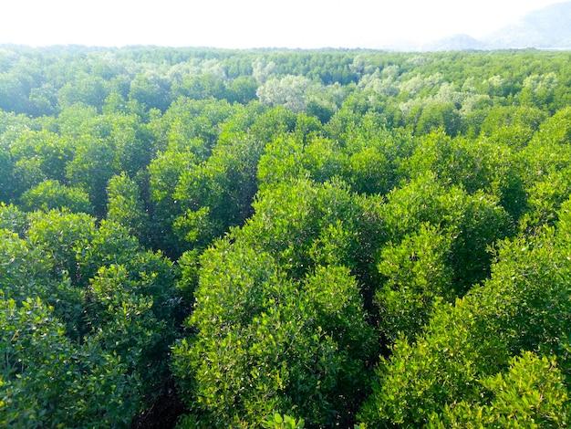 素晴らしい森の上空を飛ぶ無人機。鳥瞰図