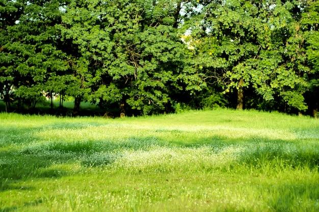木と緑の牧草地で夏の公園の風景。青空と晴れた牧草地。