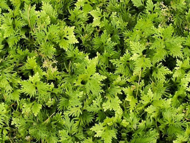 植物の緑植物は、暗い背景を残す