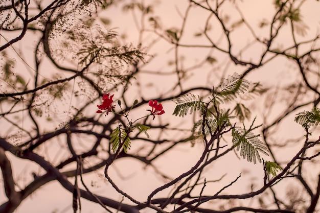 赤い花の枝が背景をぼかし